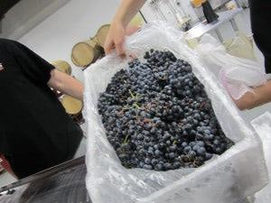 wineUdesign-box-grapes